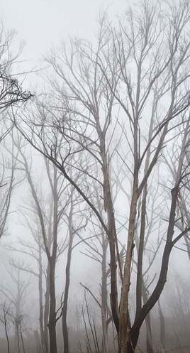 forest shrouded